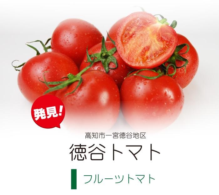 高知市一宮徳谷地区 徳谷トマト(フルーツトマト)